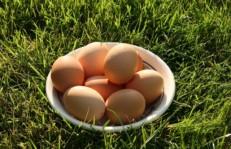 egg-19449_640