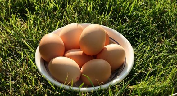 egg-19449_640-1